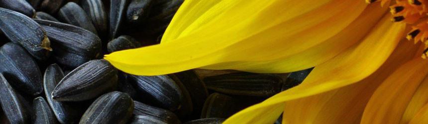 I semi della salute: semi di zucca, semi di girasole e semi di sesamo