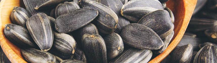 Semi oleosi e semi di girasole
